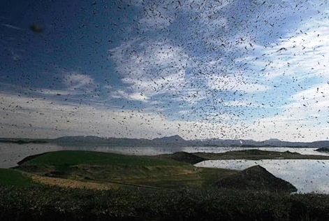 Lake Myvatn - Midges invasion