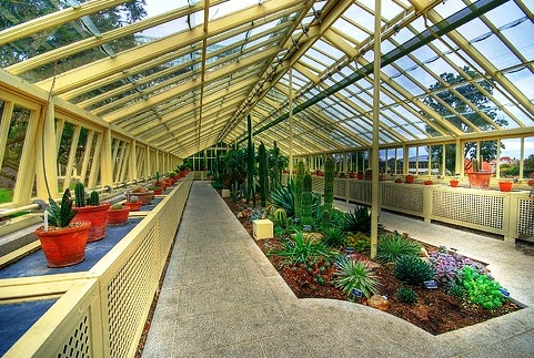 National Botanic Gardens - glasshouse