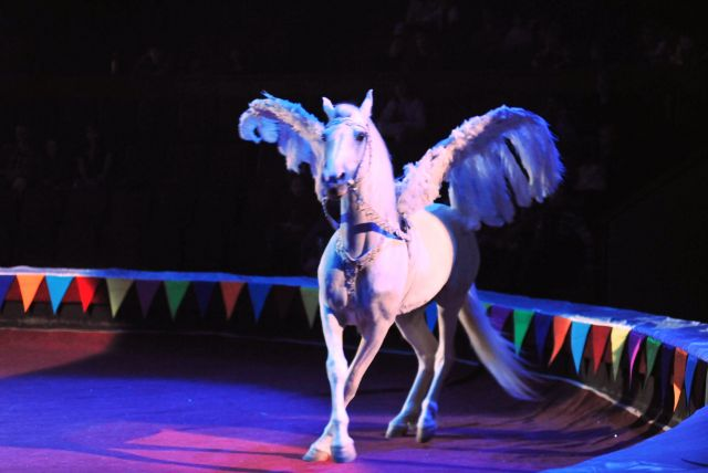 The Great Moscow Circus- the best attraction in the world - A beautiful white horse
