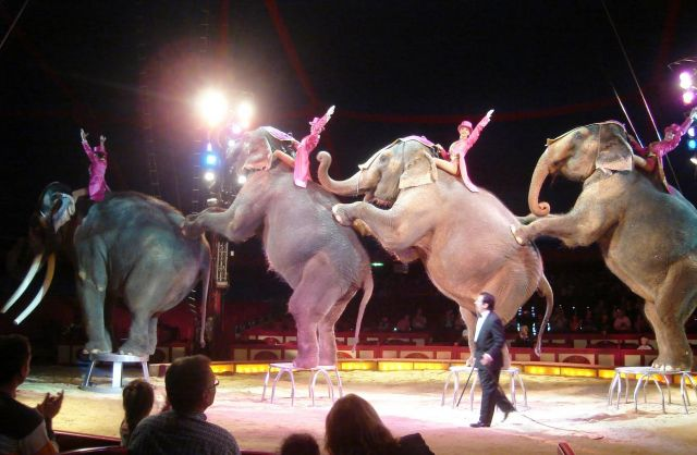 The Circus Krone-one of the largest circuses in Europe - Big and beautiful elephants