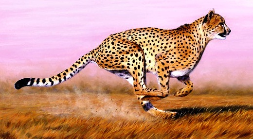 Cheetah-greatest fast runner - Fast runner
