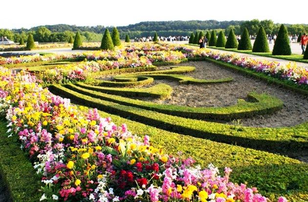 Gardens Of Versailles Flowers 8