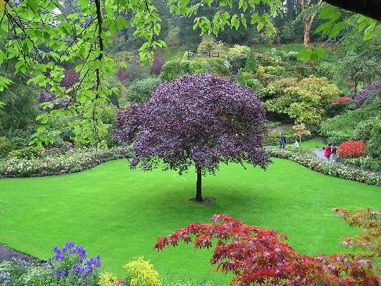 The butchart gardens the most beautiful botanical for Most beautiful garden trees