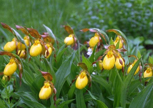 Beautiful Plants in The World Garden Beautiful Plants