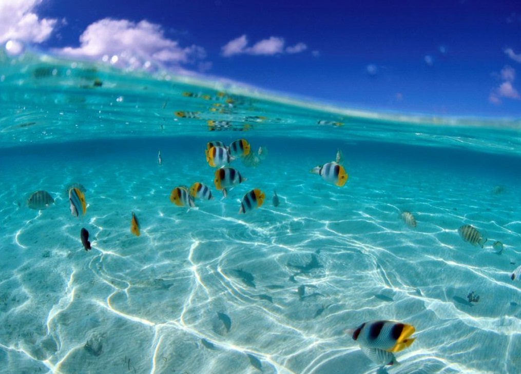 Gallery Under Water Ocean Images