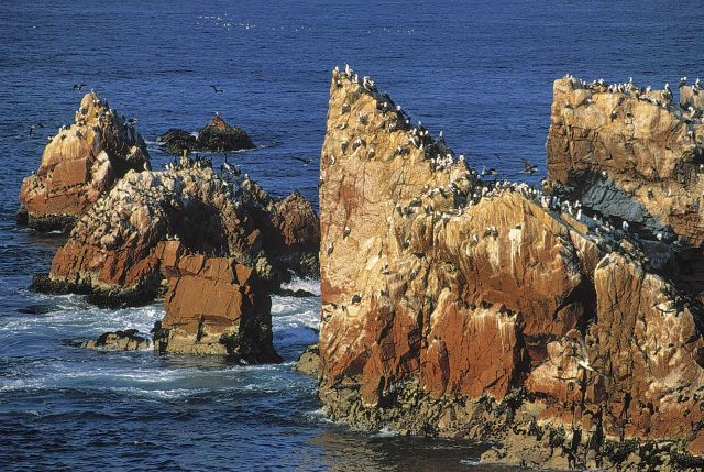 The Paracas Sea Cliffs - Popular Nature Reserve