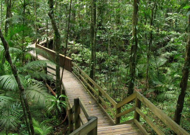Daintree National Park, Australia - Fascinating view