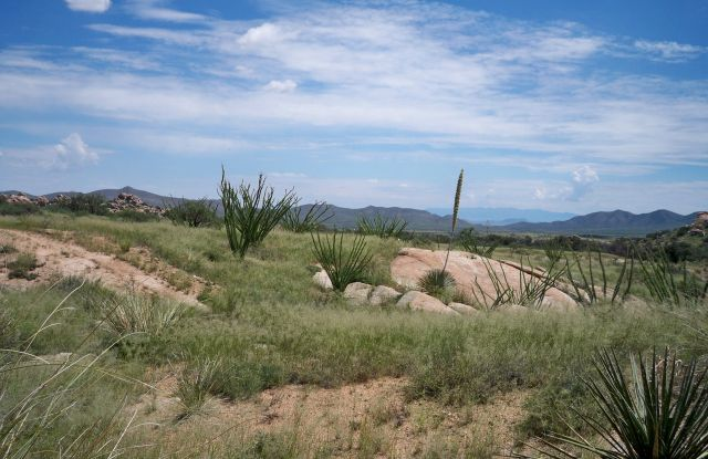 The Chihuahuan Desert - Picturesque view