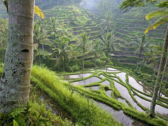 Best Places To Visit In Indonesia Ubud Magical Spot The World