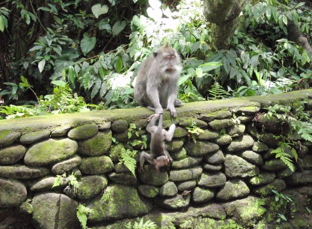 Ubud - The Monkey Forest