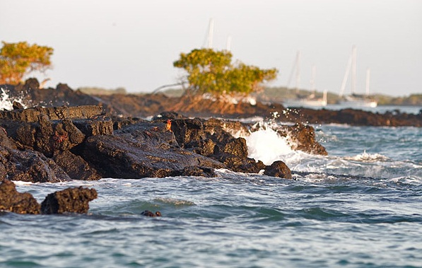 The Galapagos Islands - Oceanic islands