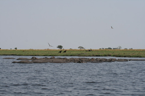 Chobe National Park, Botswana - Beautiful view