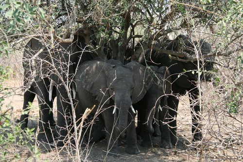 Chobe National Park, Botswana - Elephants