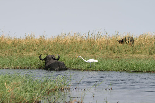 Chobe National Park, Botswana - Wildlife-viewing area in Africa