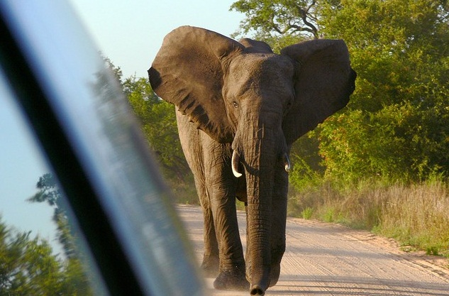 South Luangwa National Park, Zambia - Elephant