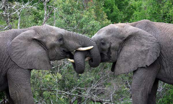Kruger National Park, South Africa - Important role in the history of the park