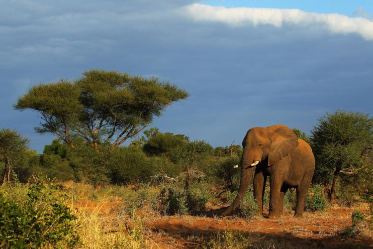 Kruger National Park, South Africa - Protected African savanna