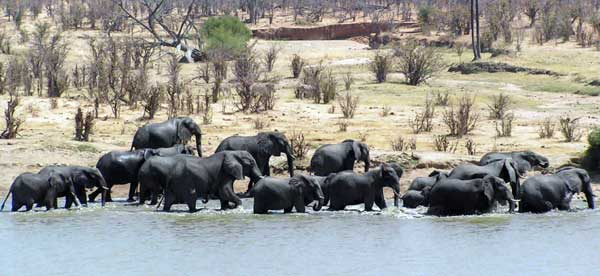 Kruger National Park, South Africa - Wonder of wildlife