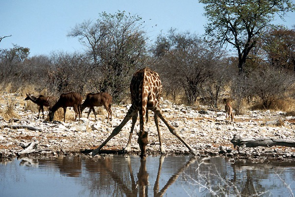 Etosha Natonal Park, Namibia - Incredible view