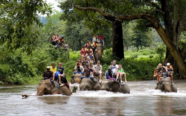 Elephant trekking - Powerful animals