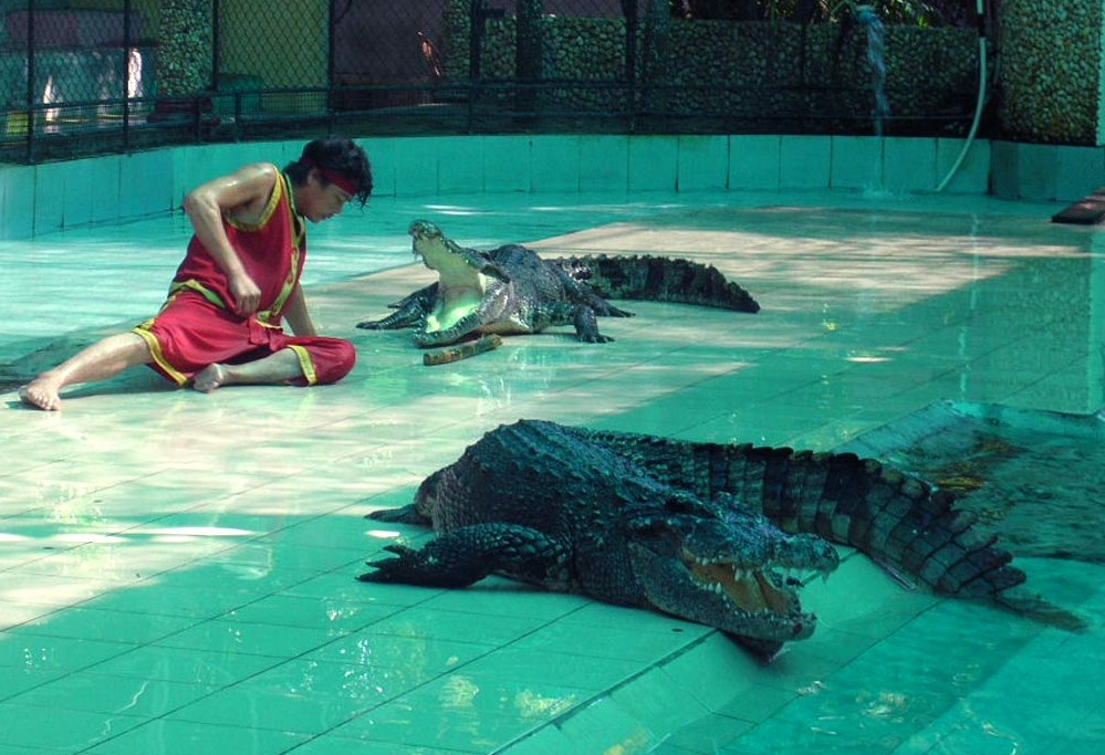 Phuket Zoo  - Crocodile Show
