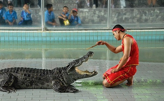 Chana Charoen Crocodile Farm - Crocodile