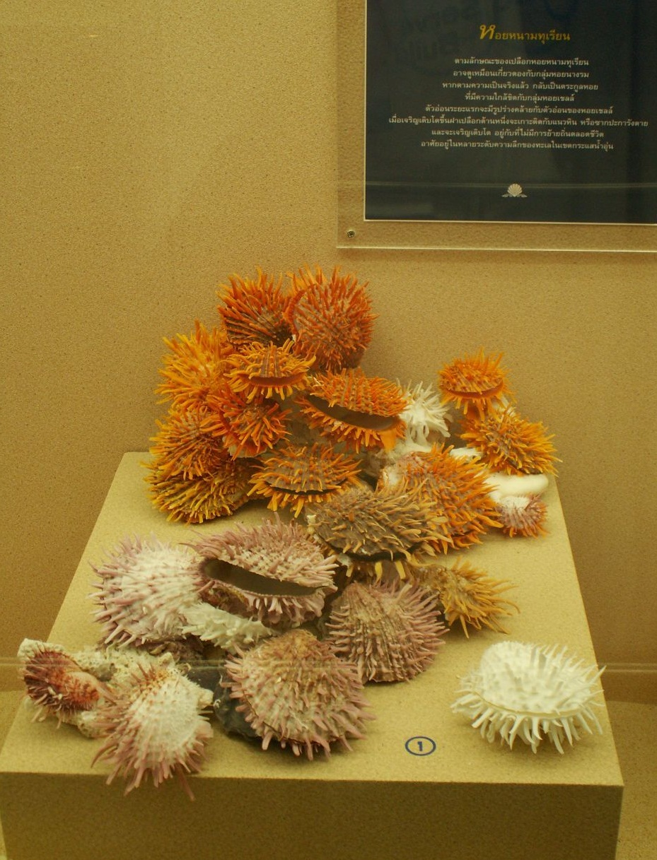 The Seashell Museum - Beautiful shells