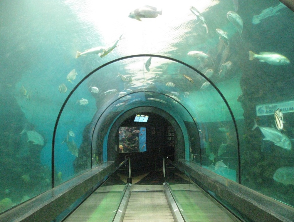 Phuket Aquarium - The Best Places to Visit in Phuket, Thailand