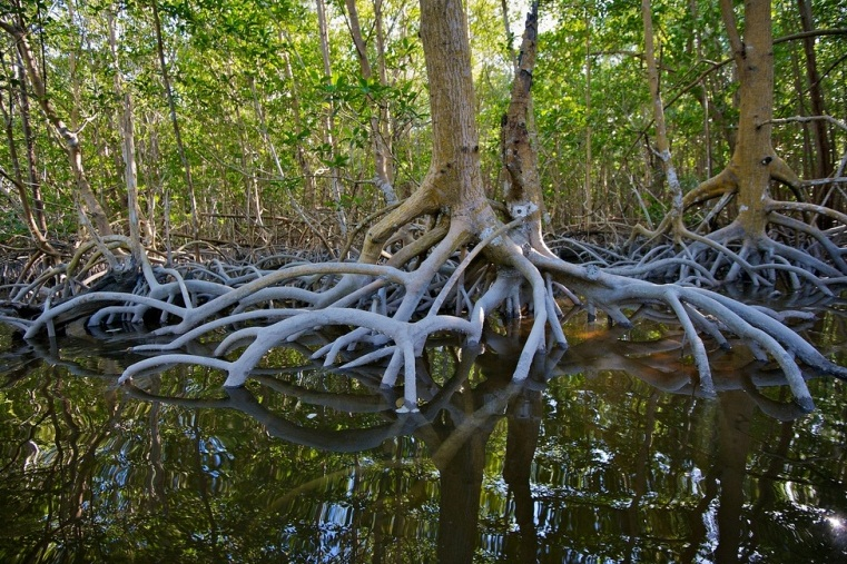 Everglades National Park  - Deciduous tree