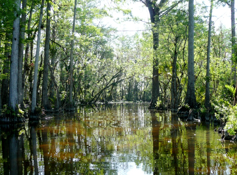 Everglades National Park  - Exceptional variety of aquatic habitats