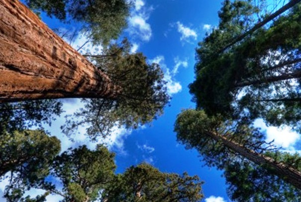 Sequoia National Park -  Fascinating scenery