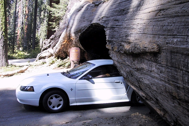 Sequoia National Park - Tunnel cut through a giant sequoia