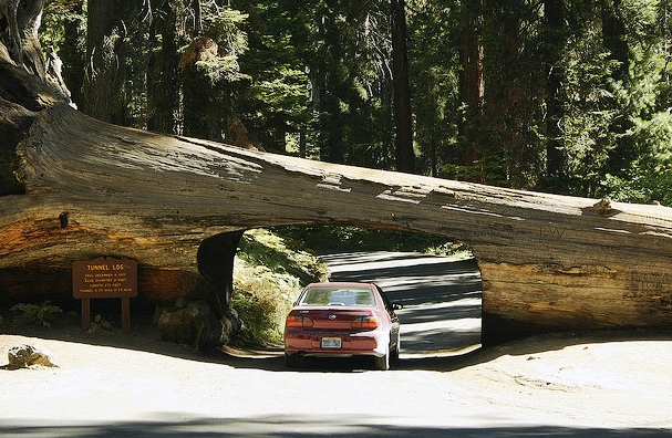 Sequoia National Park - Tunnel