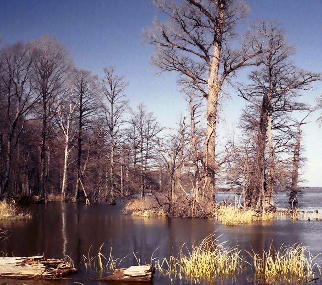 Reelfoot Lake - Picturesque view