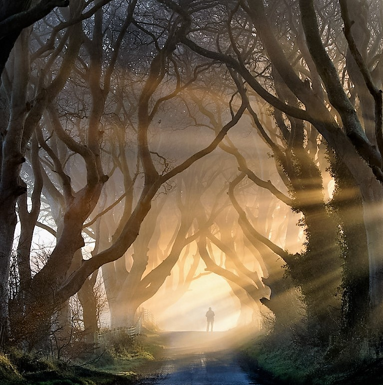 The Dark Hedges, Ireland - Magnificent sight
