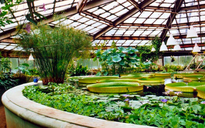 Botanical Garden,Saint Petersburg - One of the oldest gardens in Russia
