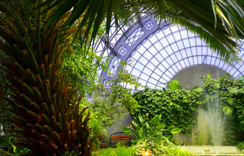 Orangery of the Tauride Garden - Exotic place