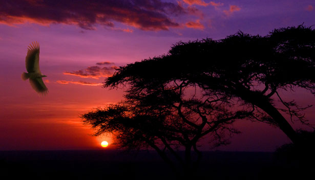 Serengeti, Tanzania - Beautiful sunset