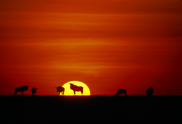 Serengeti, Tanzania - Wildlife at sunset