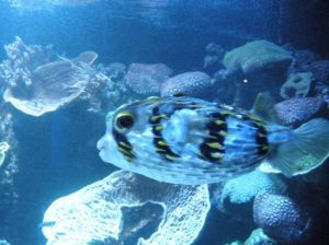 The Aquarium of the Western Australia (AQWA)