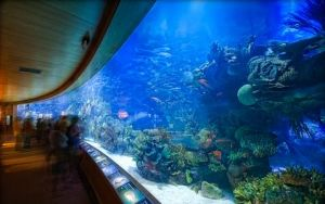 The Aquarium in Valencia, Spain