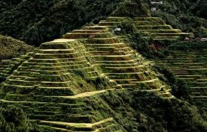 Banaue Rice Terraces in Philippines