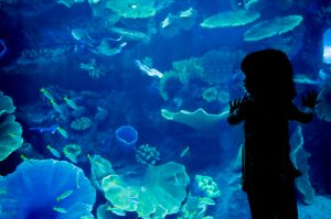 Dubai Aquarium & Discovery Centre, United Arab Emirates