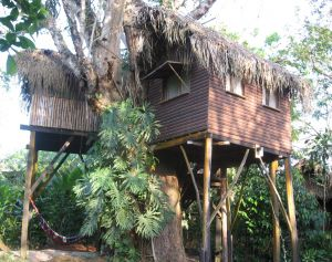 The Parrot Nest Hotel, Belize