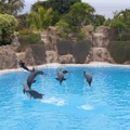 Image Loro Park in Puerto de la Cruz, Spain - The best water parks in the world