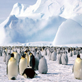 Image Antarctica - The most mysterious tourist destinations in the world