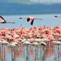 Image Lake Nakuru in Kenya - The most beautiful lakes in the world