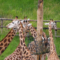 Image Prague Zoological Garden, Czech Republic - The most beautiful Zoos in Europe