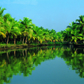 Image Kerala Backwaters - The best places to visit in India