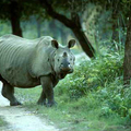 Image Kaziranga National Park in Assam - The best places to visit in India